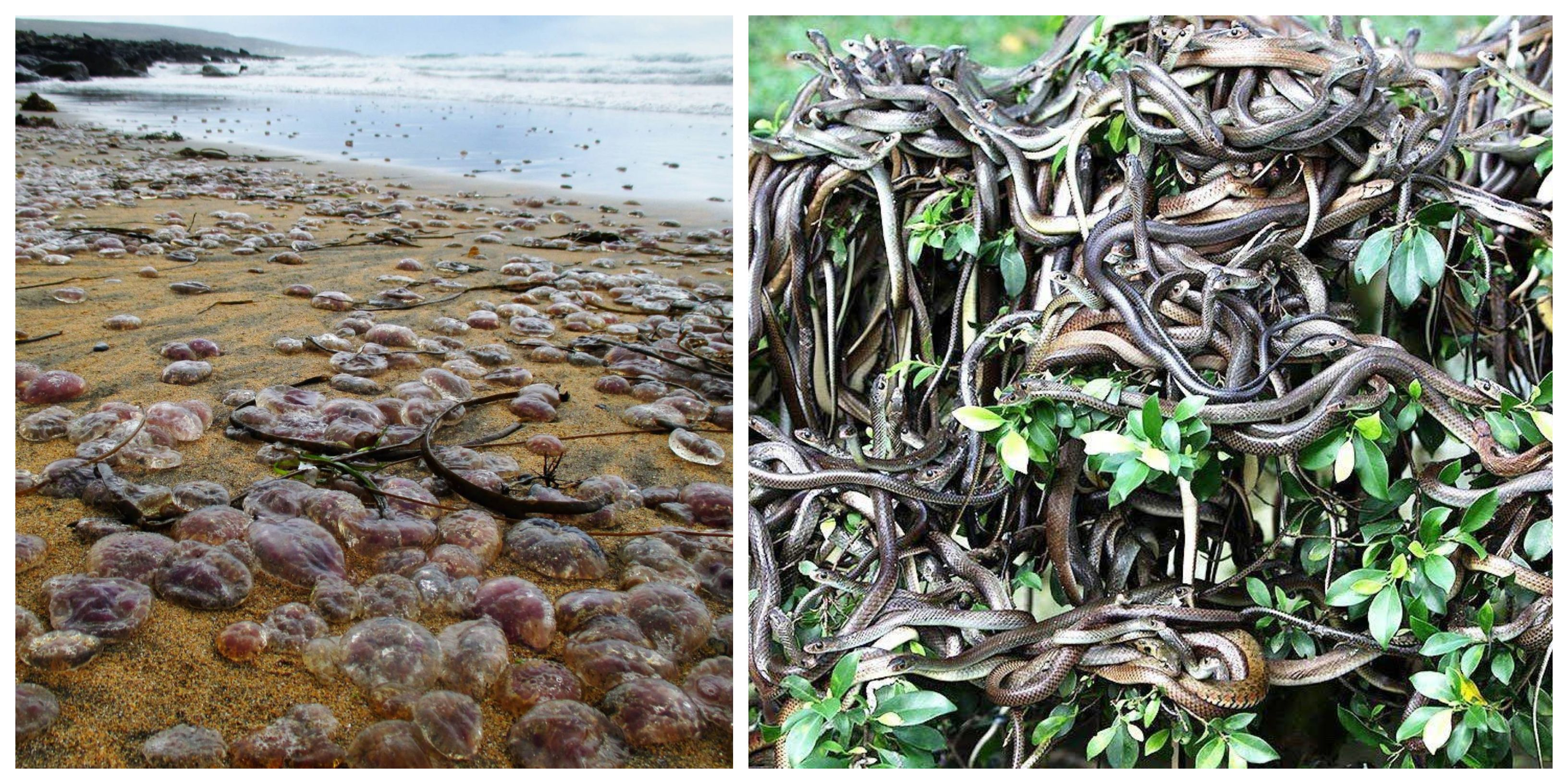10 Beaches Crawling With Strange Creatures (10 Beaches That Are