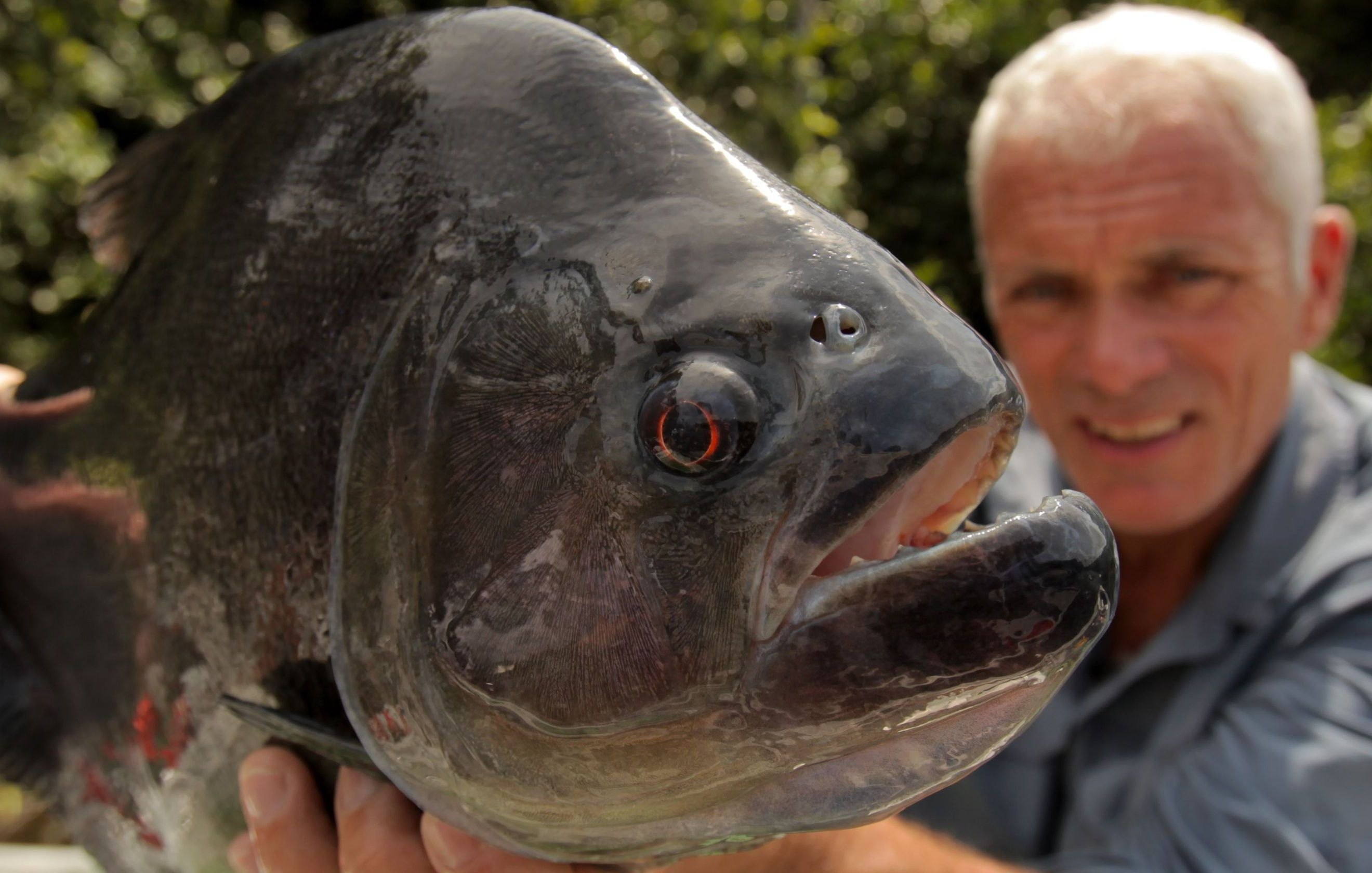 16 Creatures From River Monsters Caught On Camera 5 That Still Remain A Mystery