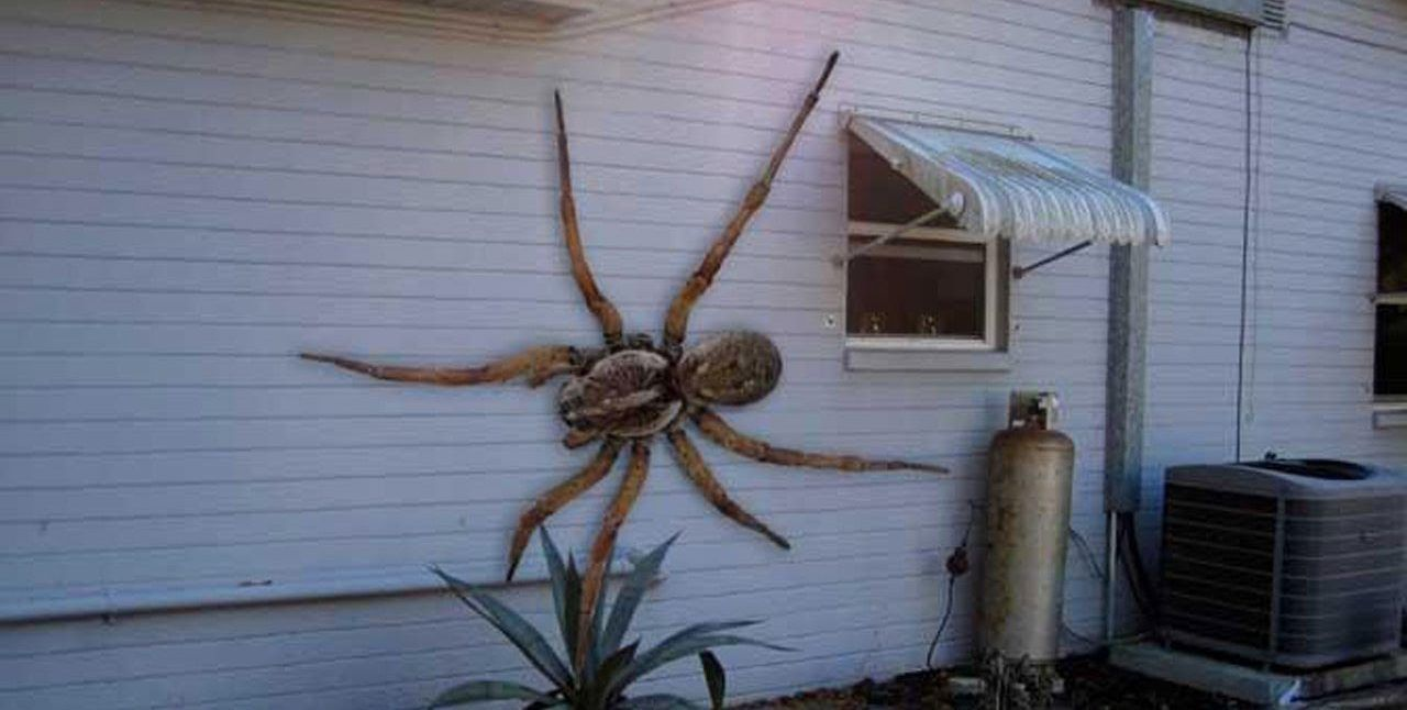 The Most Biggest Spider On Earth - The Earth Images ...