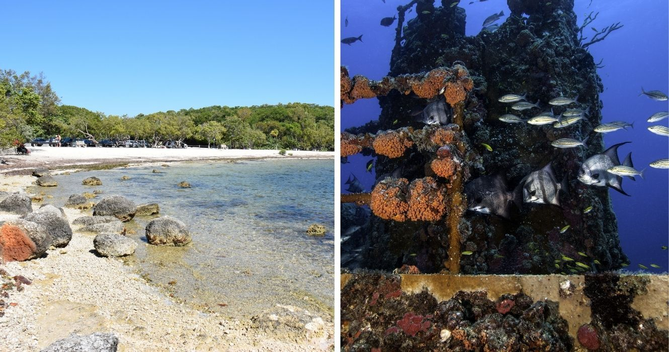 What to Know About Snorkeling in John Pennekamp Coral Reef State Park, Key Largo's Best Reef