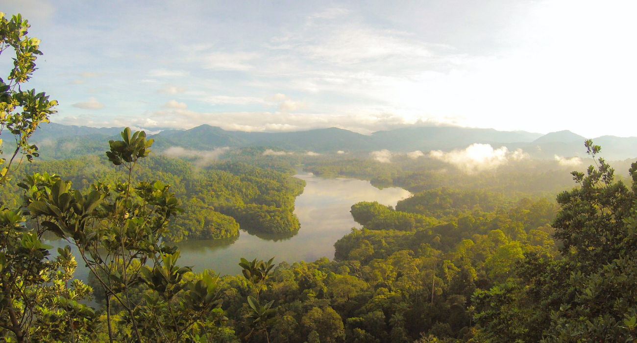 How You Can See French Guiana, A Territory Made Up Of Mostly Rainforests