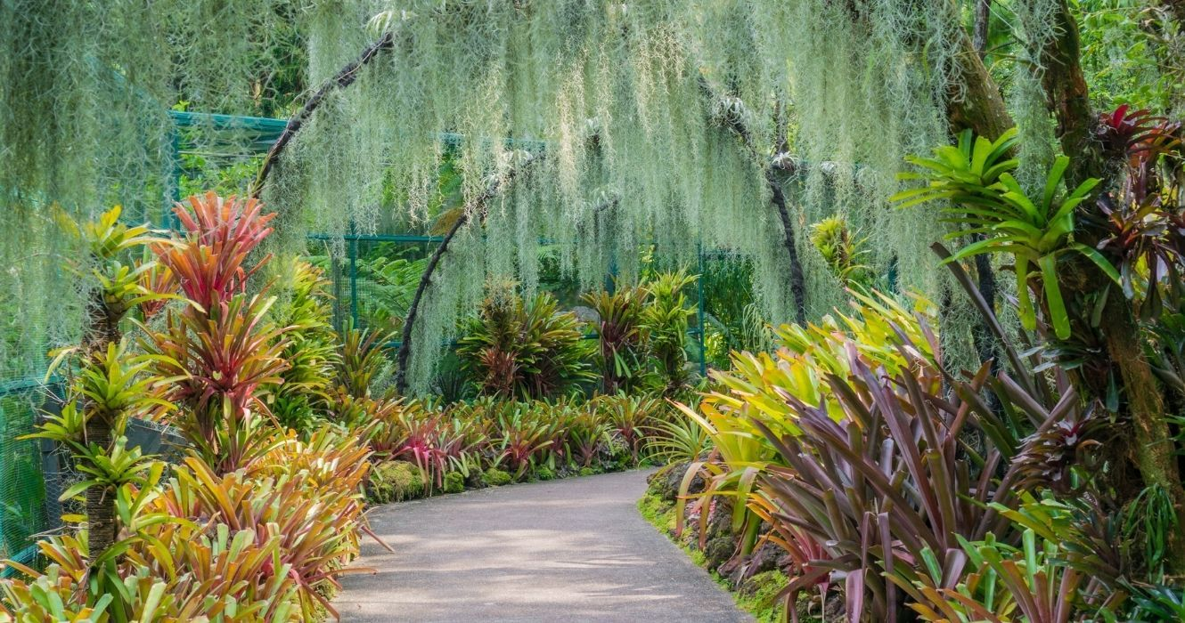 Singapore Is A Must Visit For Plant Lovers, And These Botanical Gardens Are Why