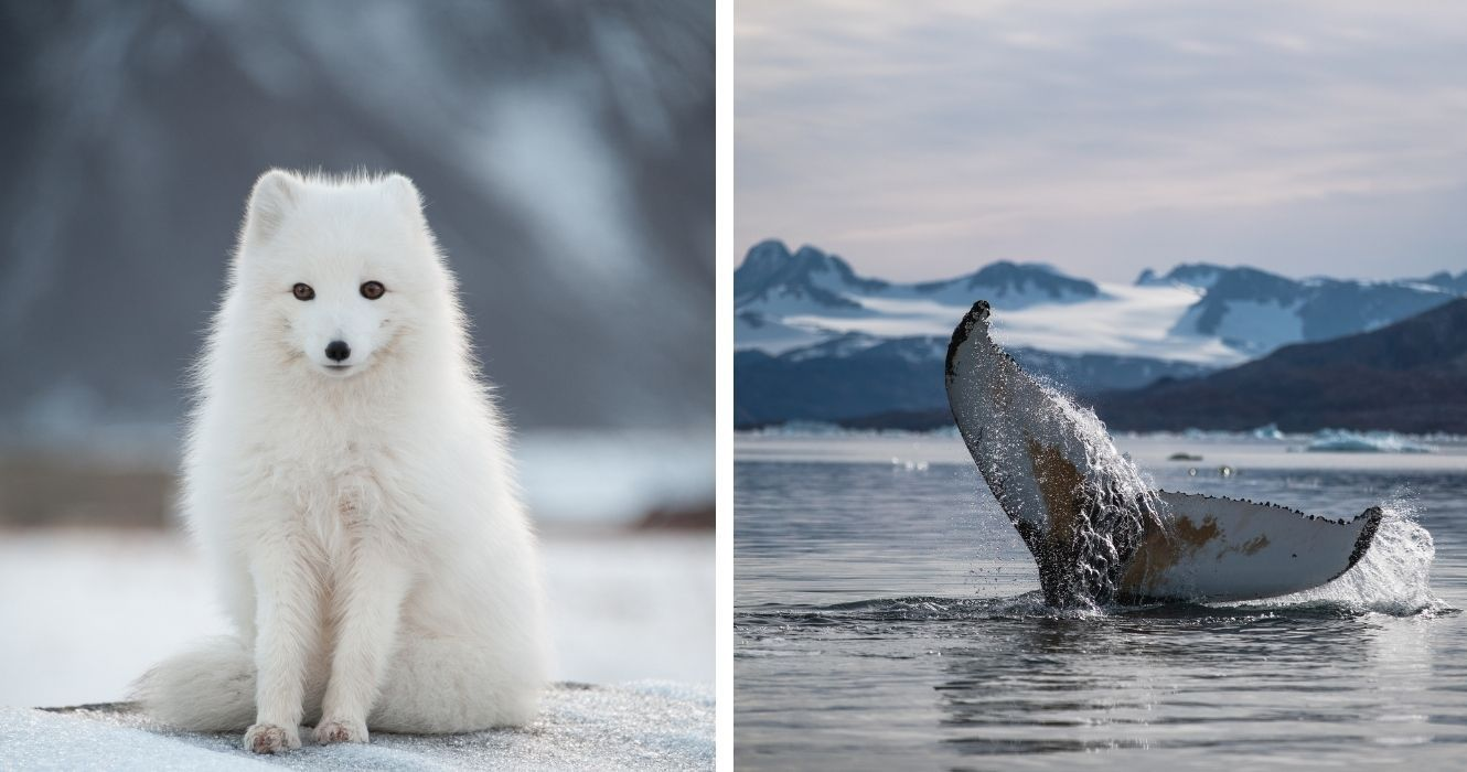 Here Are Some Of The Wildlife That Visitors Can See On A Tour Of The Canadian Arctic