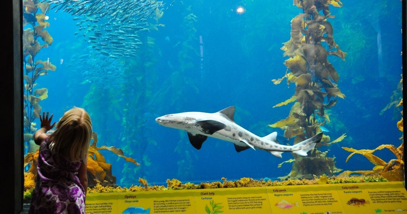 Have Kids At Home? Monterey Bay Aquarium Should Be On Your Field Trip List