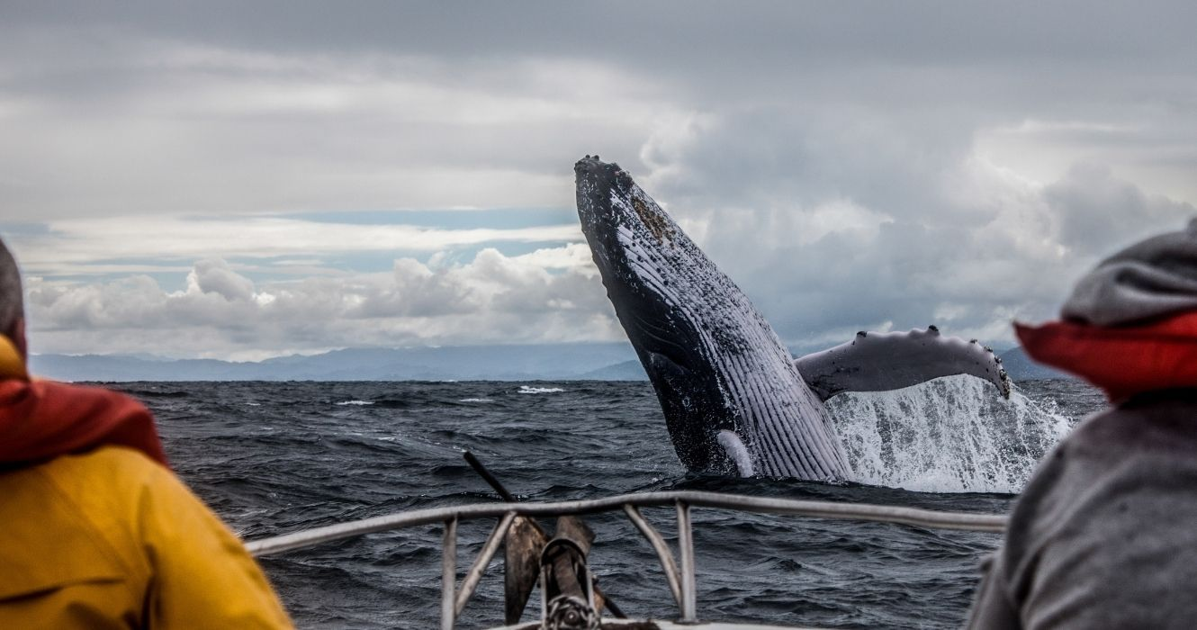 Whale Watching: The Best Places Around The World To See These Majestic Animals