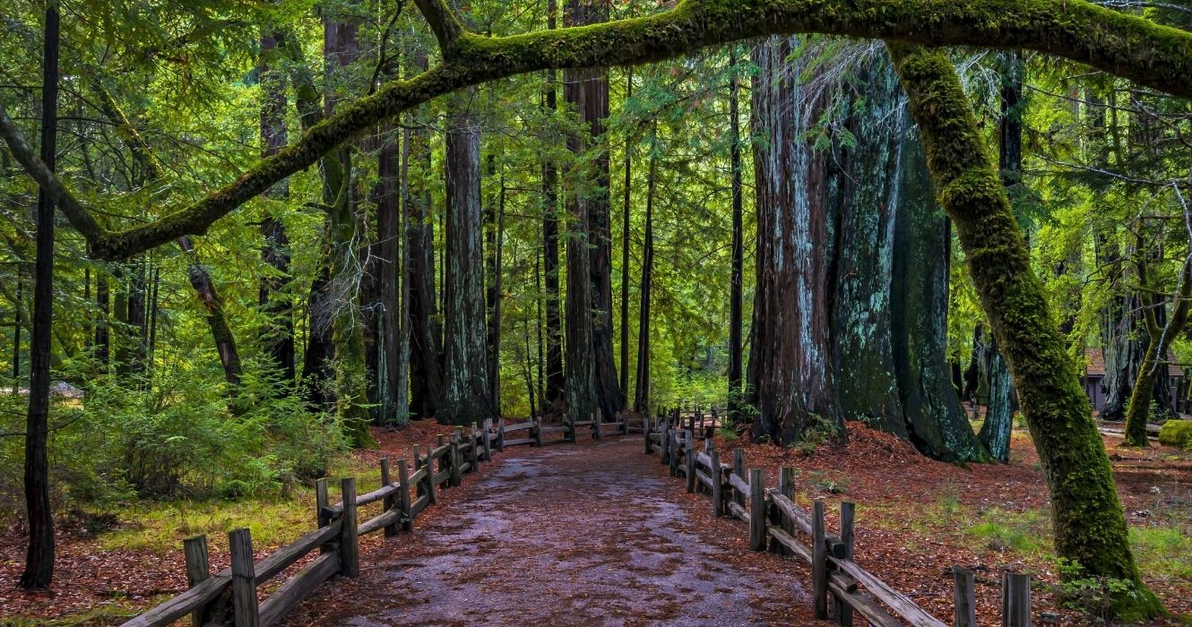 A Visit To Big Basin Redwoods State Park, The Oldest In California